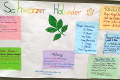 Holunder_Plakat_1a